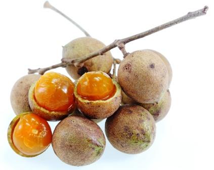Schleichera oleosa (Lour.) Oken Fruit