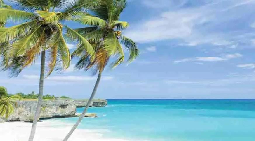 Cay White Seafari