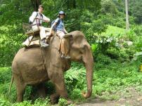 Khao Sok - Elephant Ride