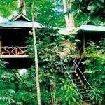 Khao Sok Tree House Tour