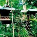 Khao Sok Casa sull'albero