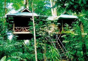 Khao Sok Tree House - Overnight Tour from Khao Lak
