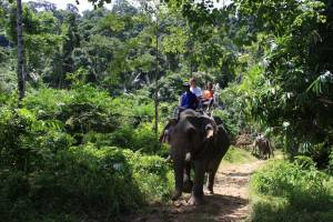 Private Elephant Trekking Khao Lak