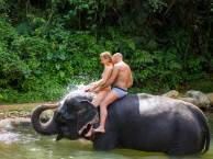 Khao Lak Elephant Bathing