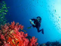 Similan Inseln tauchen von Khao Lak aus mit Easy Day Khao Lak