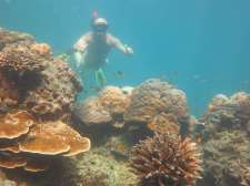 Reef - snorkeling at Phi Phi Island