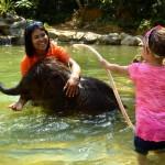 Baby Elephant Bathing in Kapong
