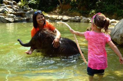 Baby Elephant Bathing in Kapong