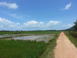 Koh Yao Noi Tour - Visit a local Rice Paddy