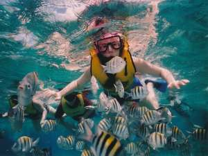 Koh Samui Snorkeling - Swim With Fish