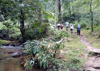 Mae Kampong, Chiang Mai -jungle trekking