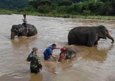 chiang mai, elephant camp - elephant ride and bath