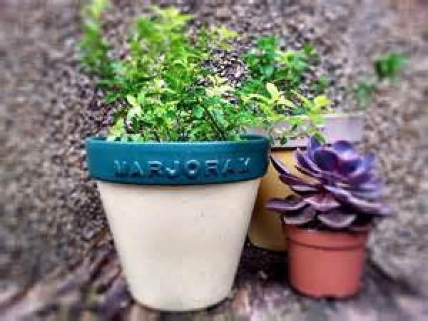 DIY Planting pot ideas