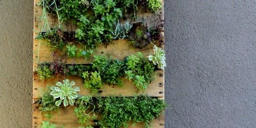 pallet planters for vertical garden