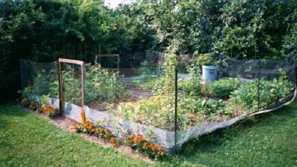 Innovative Lawn fencing ideas