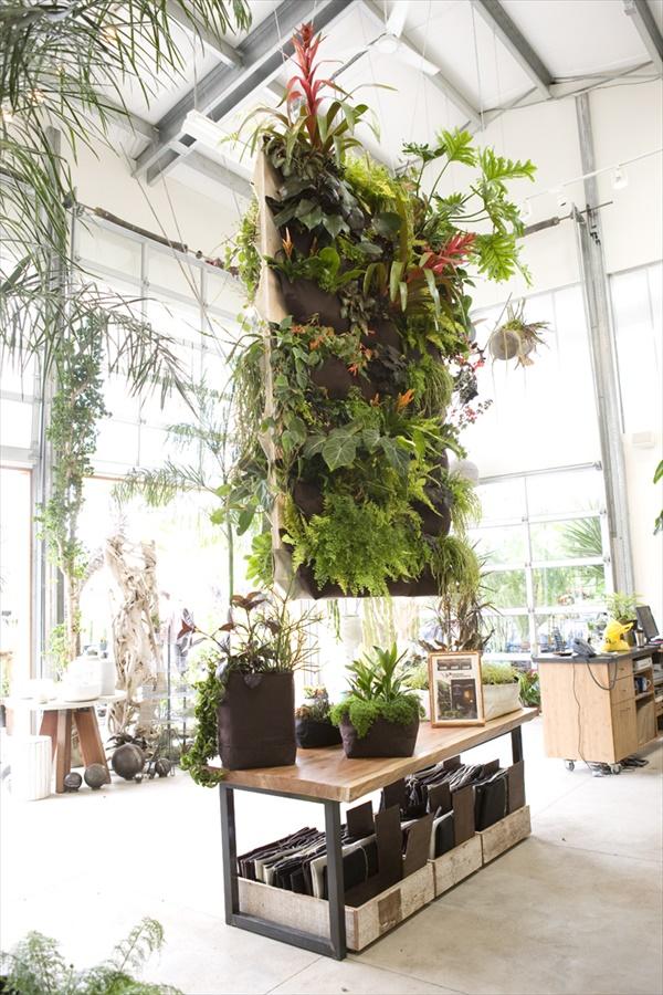 DIY easy Indoor Gardening ideas