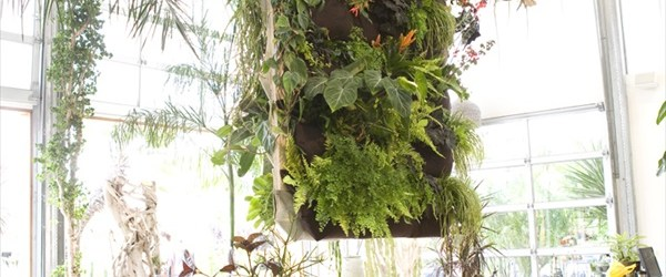 DIY easy Indoor Gardening ideas