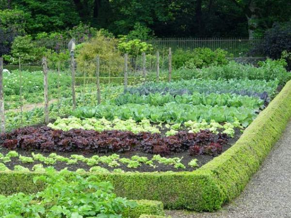growing vegetable at home