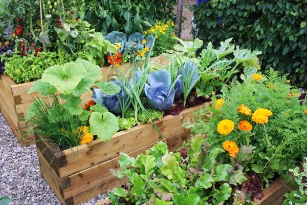 Easy home gardening
