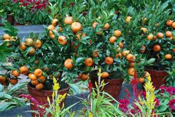 Growing vegetable and fruits at home