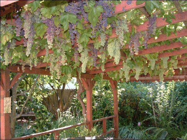 Easy fruit Gardens ideas11