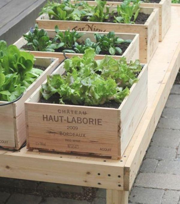 DIY Vegetable garden