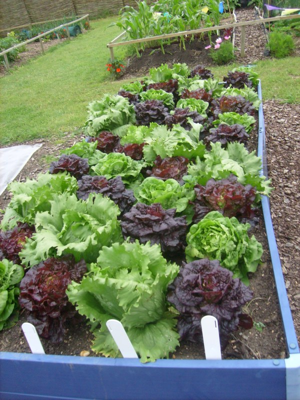 Easy vegetable gardening