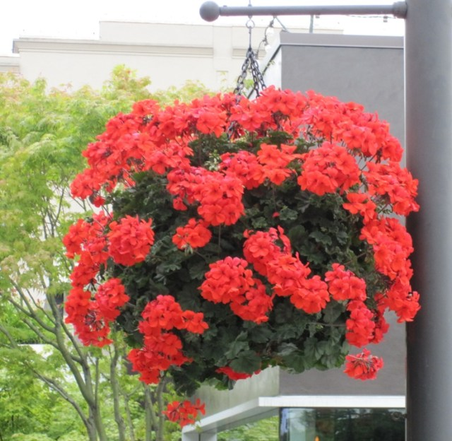 How to decorate your home with hanging flowers