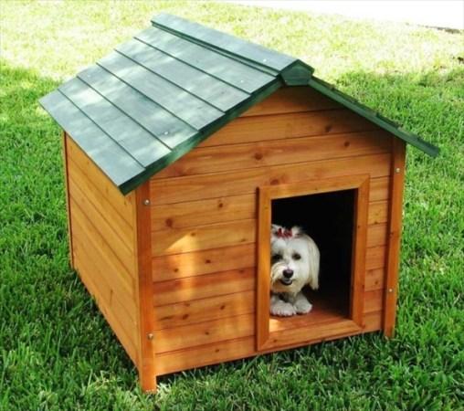 Cute Dog House