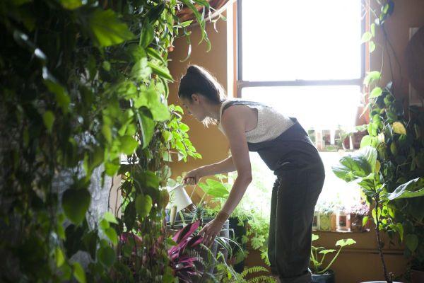 inexpensive gardening plans