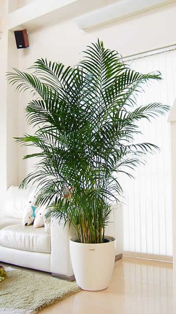 diy indoor plants