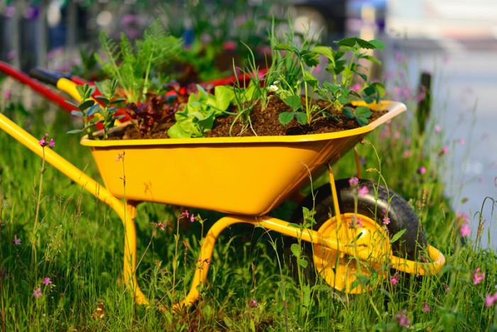 Brightly-Colored-Wheelbarrow-Planter