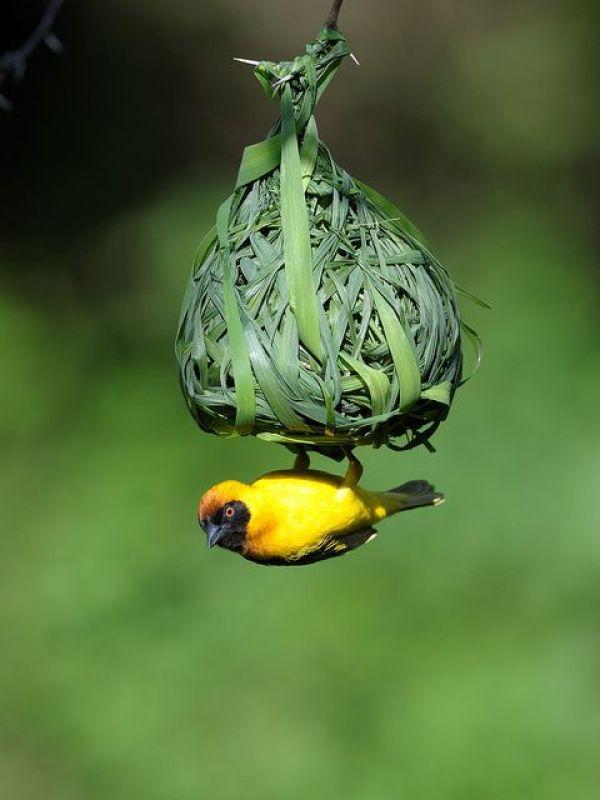 BIRD NEST DECOR