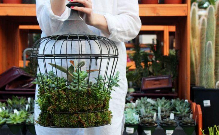 DIY birdcage planter