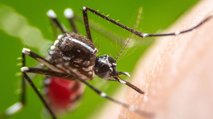 Killer Diseases From Mosquitoes