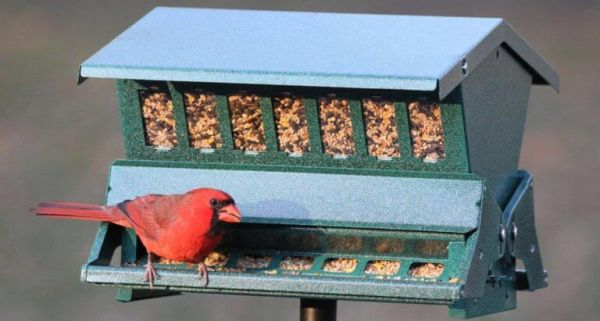 House Bird Feeder