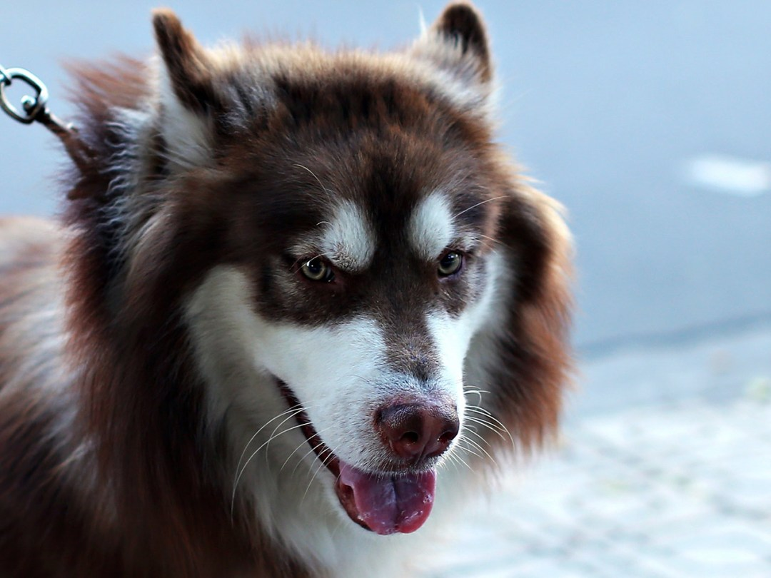 Adorable Animal Breed
