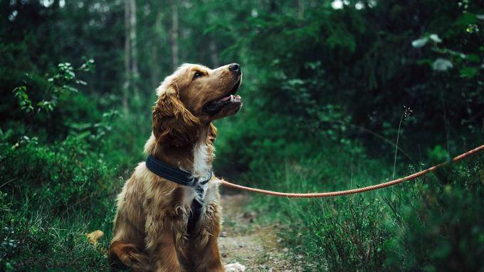 Adorable Animal Canine