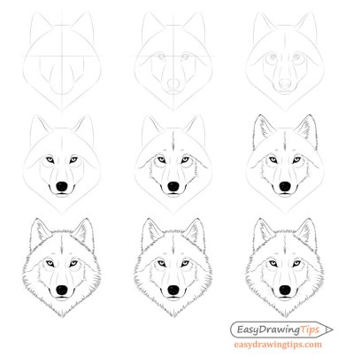 Wolf face step by step drawing