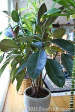 air cleaning plant, air purifying plant