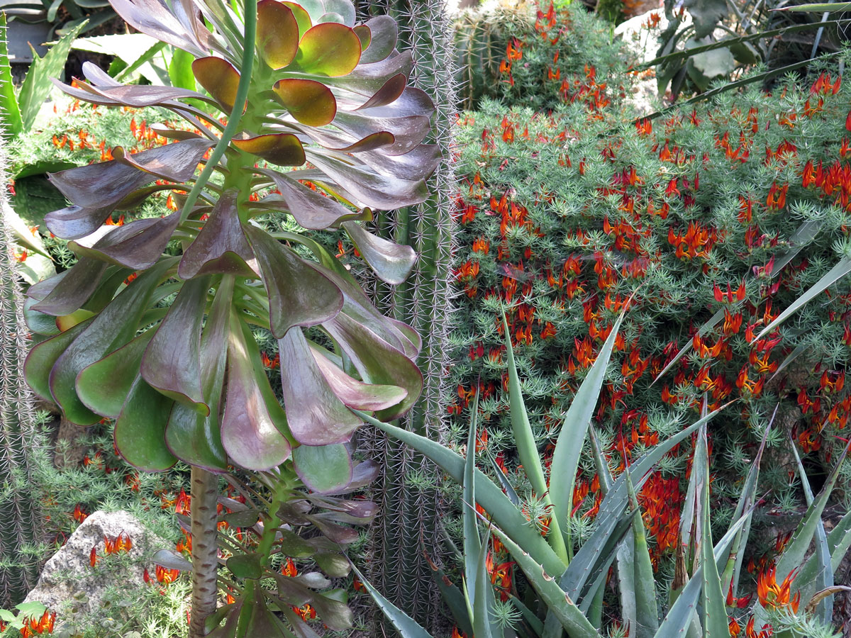 A variety of exotic plants