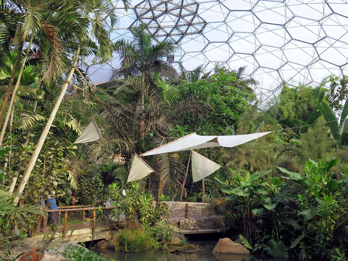 The Rainforest Biome