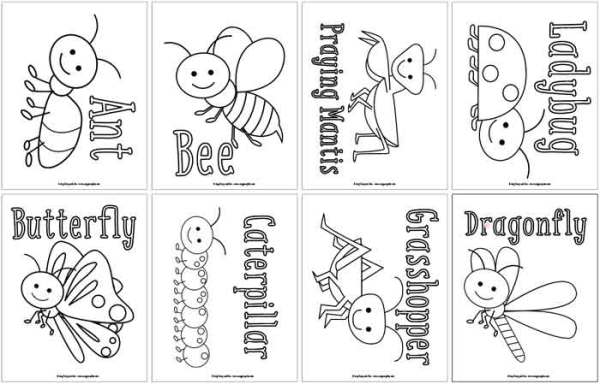 bug coloring page # 22