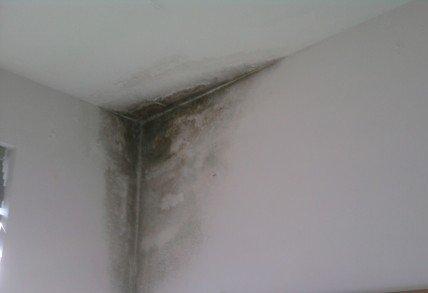 muffa umidità infiltrazioni acqua