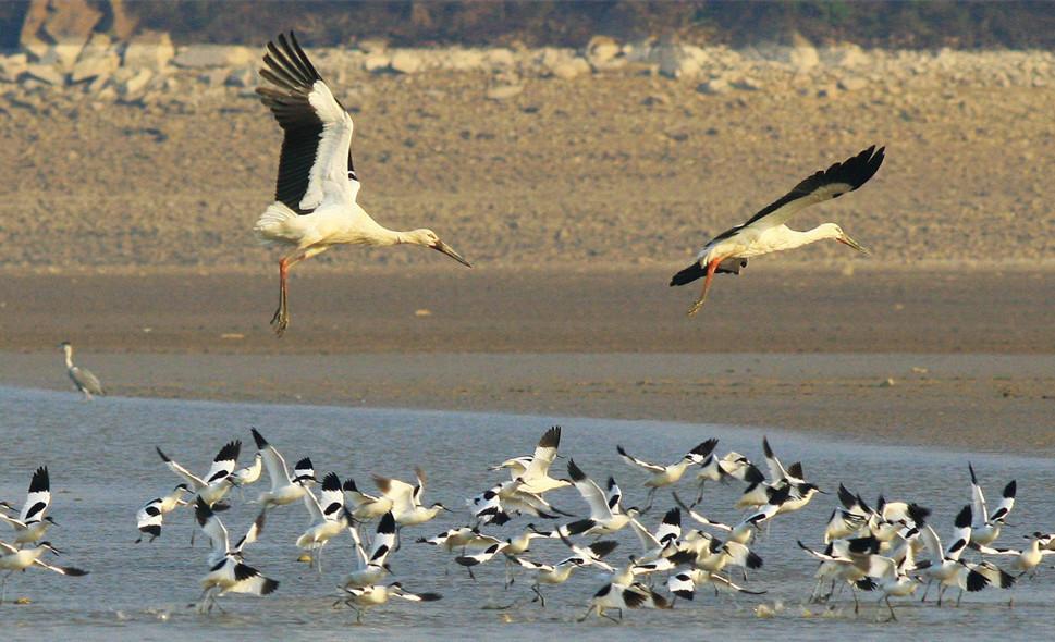 Poyang Lake Birding