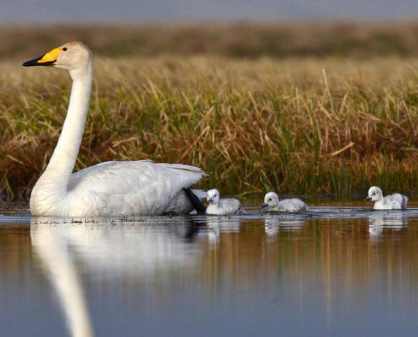 Xinjiang Birding