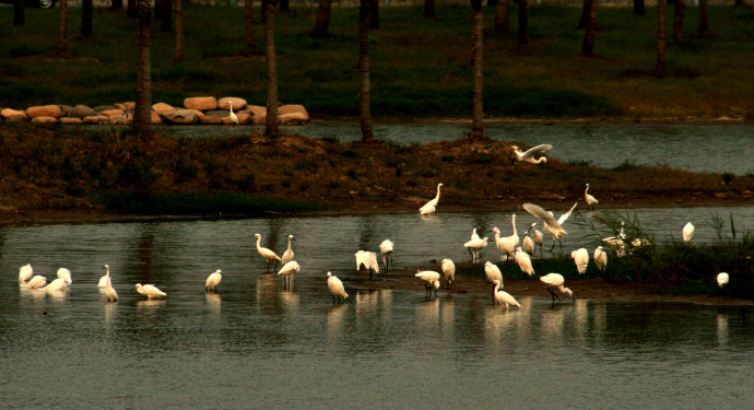 Birds in Dongtan Wetland