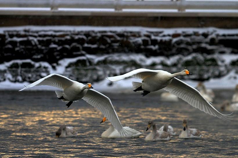 Rongcheng Birding