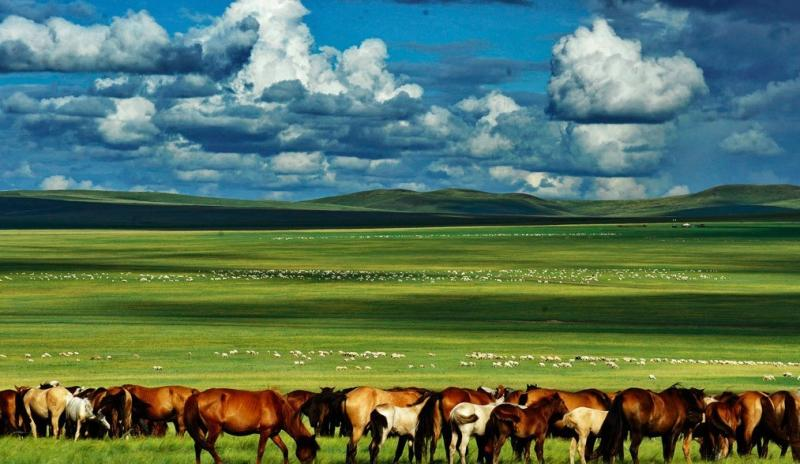 Hulunbuir Prairie Tour