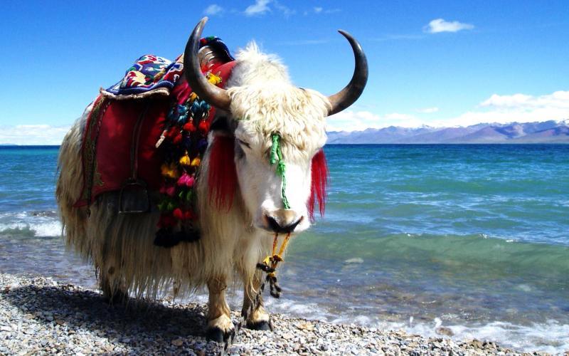 Qinghai Lake in China